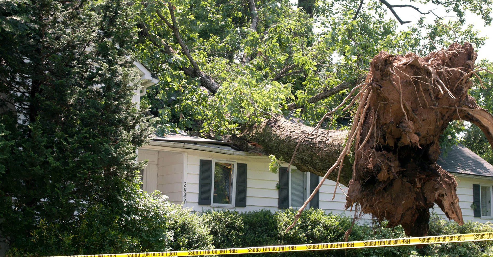 Emergency Tree Removal, Storm Damage Control, & Assessment