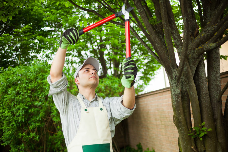 Tree Service For Menifee CA